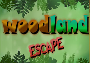Woodland Escape