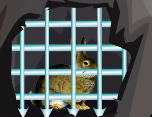Rabbit Escape : Escape Games 46