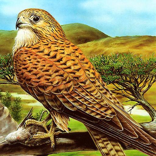 Birds of Prey Puzzle