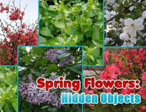 Spring Flowers: Hidden Objects online hra