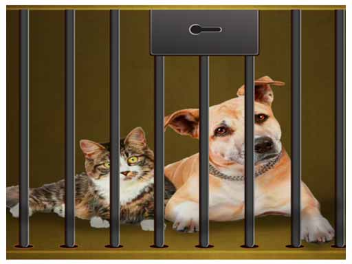 Rescue our pets