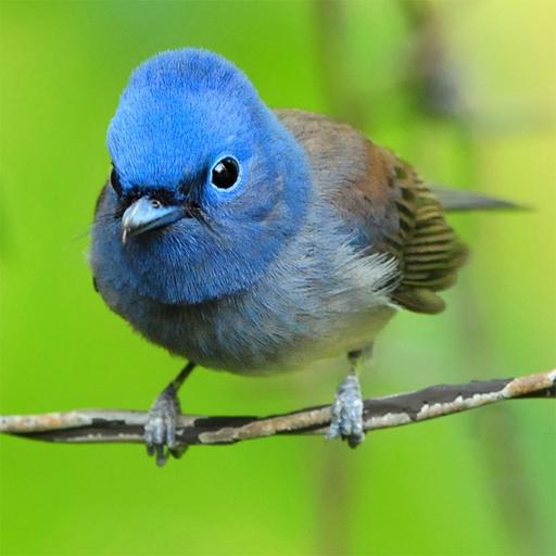Lovable Birds Puzzle